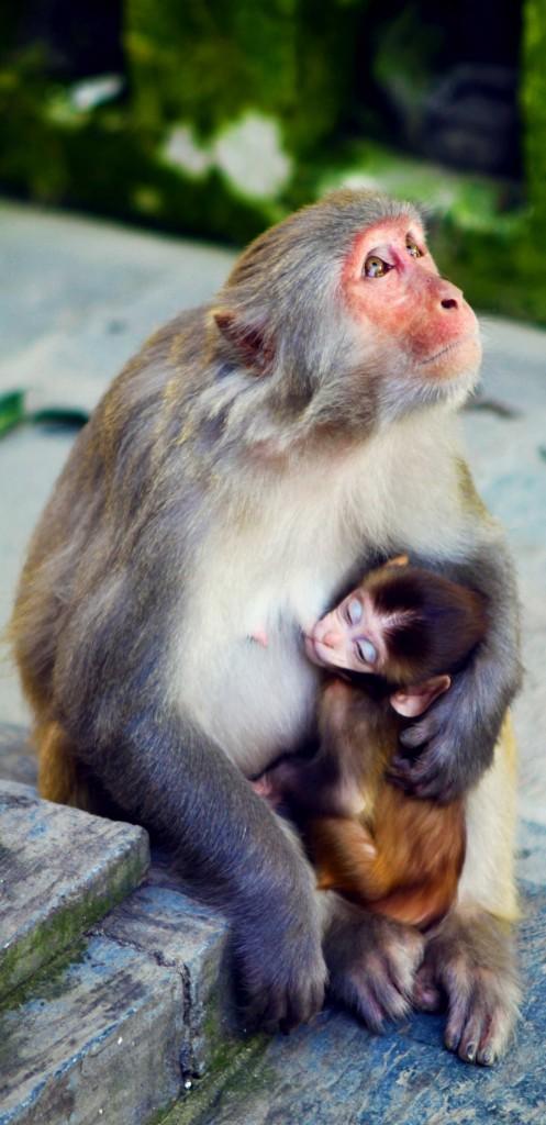 Was der Kunstmarkt gerne hätte – Künstler sind Affen